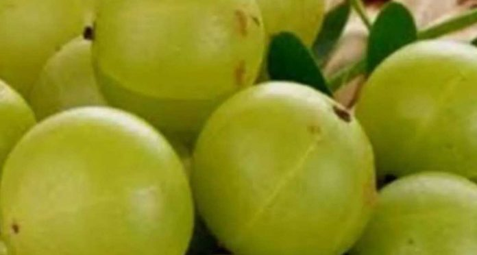 Amla protects you from air pollution and increase immunity
