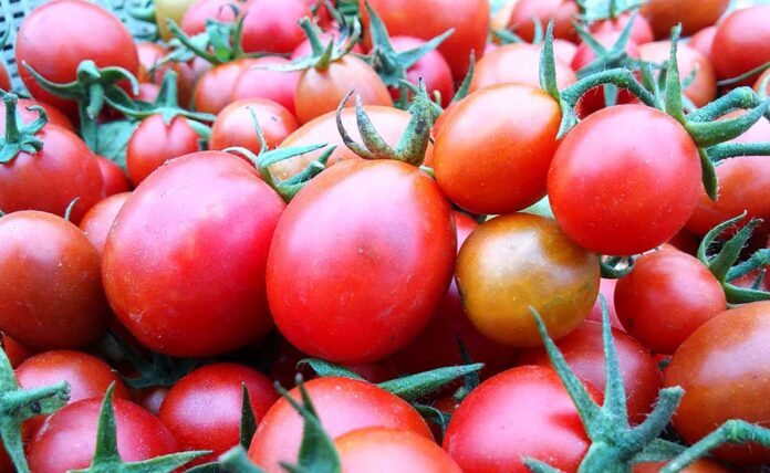 Know about the hidden benefits of Tomato